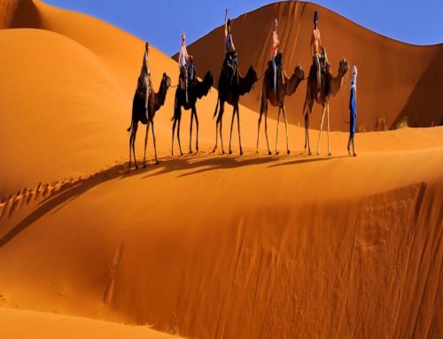 2 Nights camel trekking in desert Merzouga